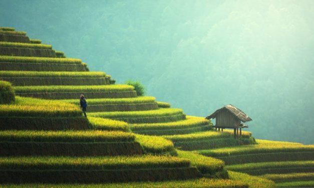 Könyvajánló: Kína tanulmány 2.