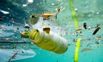Miért eszik a műanyagot a tengeri állatok?
