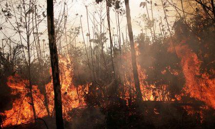 Azért ég az Amazonas, mert a világ sok húst fogyaszt